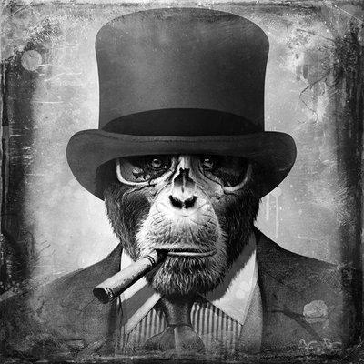 chimp1984